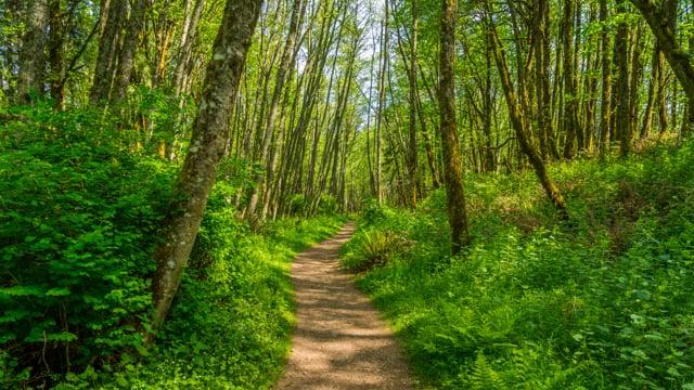 Tradition Lake Loop Trail. Issaquah, Washington - Virtual Forest Walk