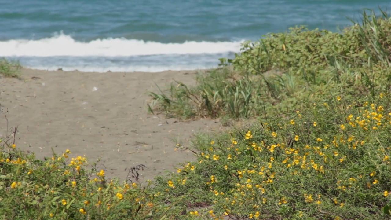 Playas Amenazadas