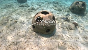 2194 reef ball artificial reef swim around