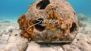 2204 nice shot reef ball close up