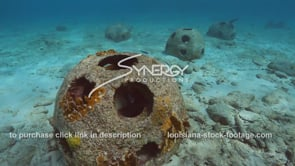 2205 fish swimming around artificial reef ball video