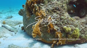 2209 close up coral growing artificial reef ball video
