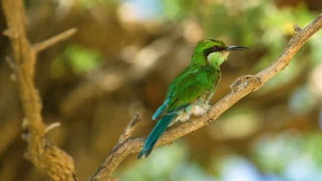 Amazing African Birds. Part 3 - African Wildlife Video