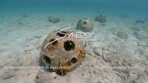 2198 reef balls in sunlight