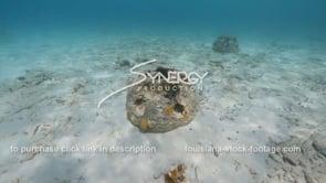 2199 swim around reef ball artificial reef