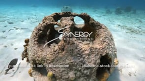 2207 gliding over reef ball artificial reef restoration habitat