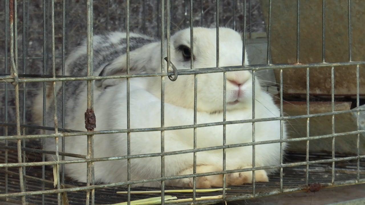 Biogranjita: Conejos