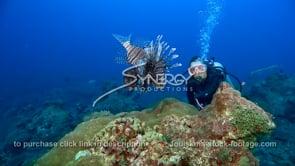2255 scuba diver observes lionfish
