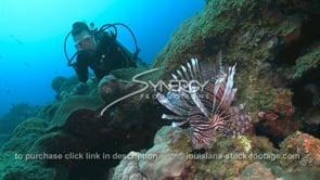 2257 scuba diver watches lionfish