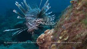 2268 large lionfish off the coast of Louisiana