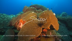 2280 lionfish on brain coral