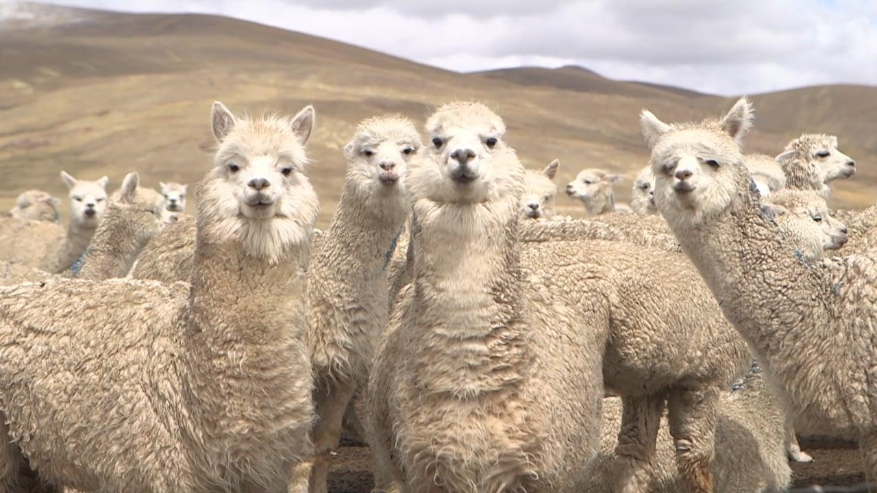 Calpex - Tessendo la solidarietà (Perù)