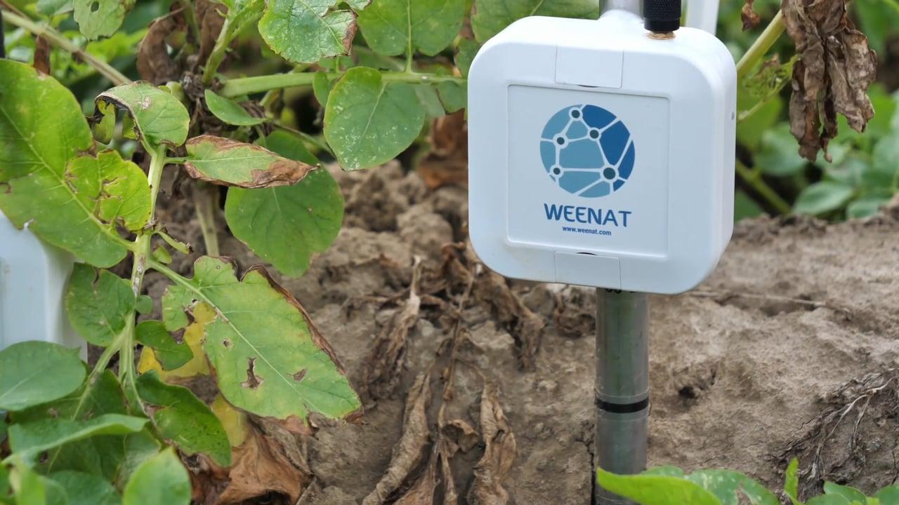[Start-up] Weenat : une météo connectée pour l'agriculture