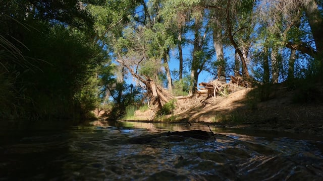 The San Pedro River & The People Who Care