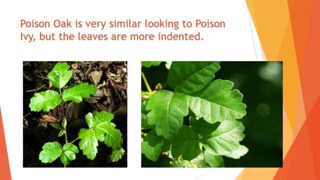 How to - Poison Ivy Safety