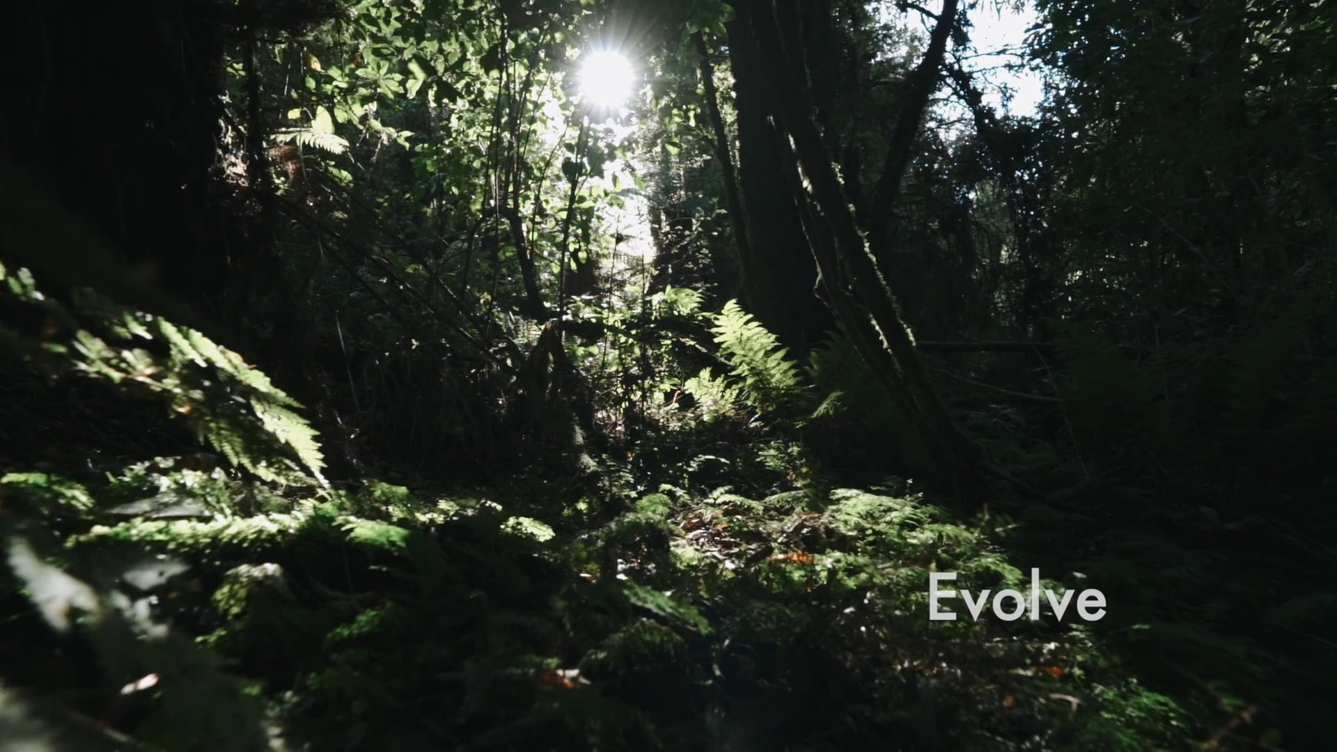 Ep 2: Evolve