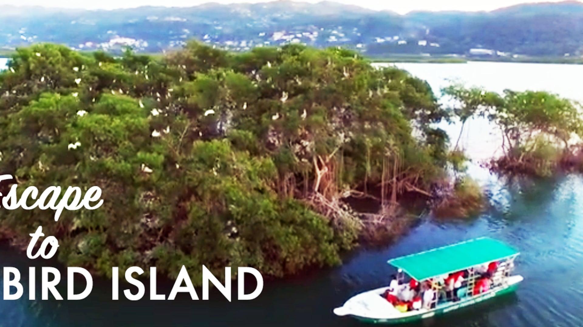 Escape to Bird Island