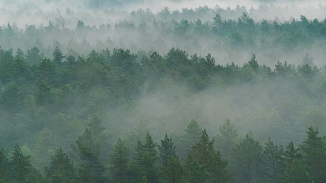 Foggy Forest after the Rain
