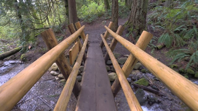Walking in the Woods - 3