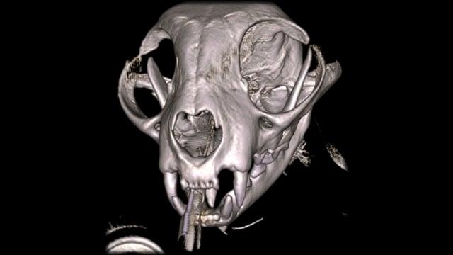 VetCAT CT 3D Software