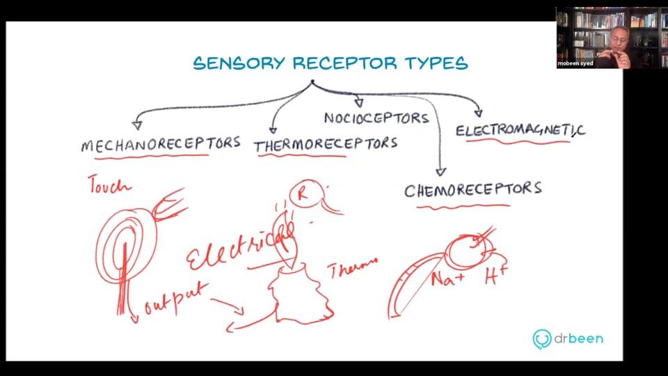 Sensory Receptors in Skin (Webinar Recording)