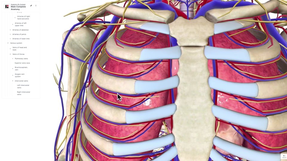 The Lower Respiratory Tract Part 2
