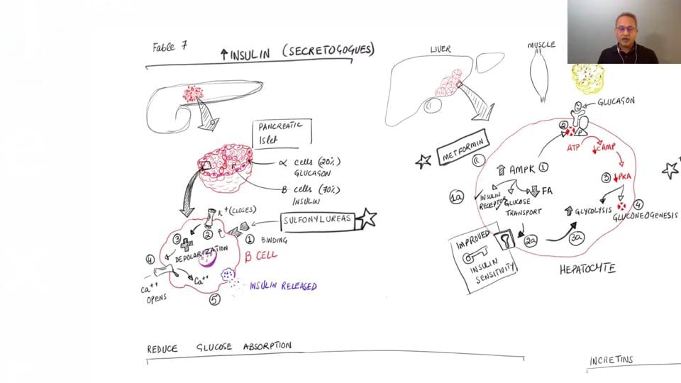 Drug Classes to Manage Type II Diabetes Mellitus (Managing Type II Diabetes Mellitus - Part 7. Webinar)