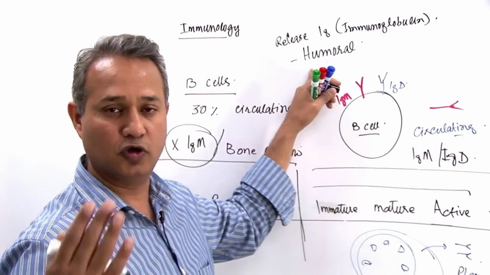 B Cell Functions (part 2)