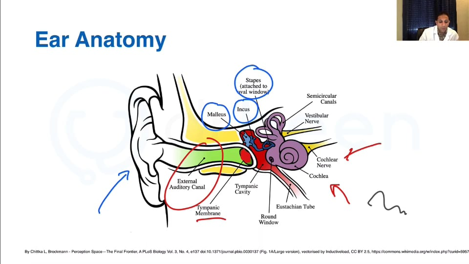 An Overview of Common Ear, Nose, and Throat Conditions (Part 1)