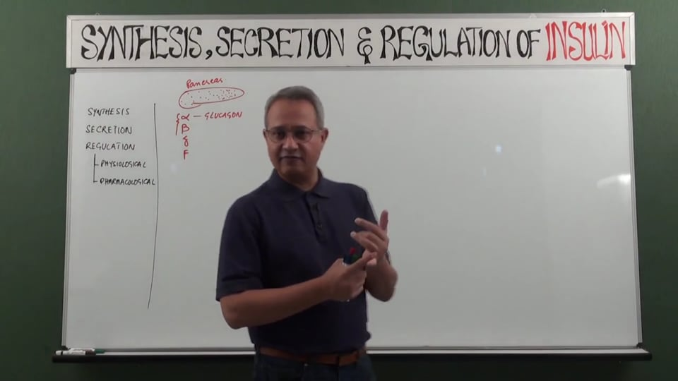 Insulin Synthesis, Secretion, and Regulation