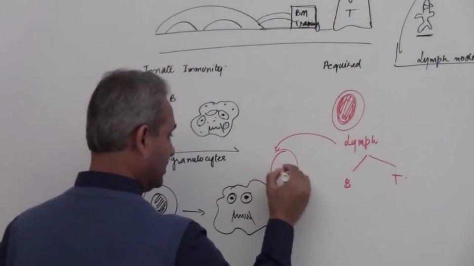 Neutrophils (part 1)