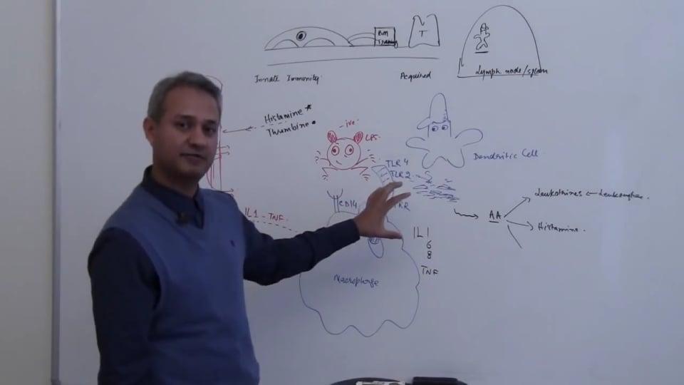 Neutrophils (part 12)