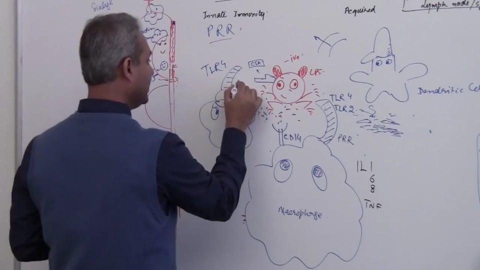 Neutrophils (part 15)