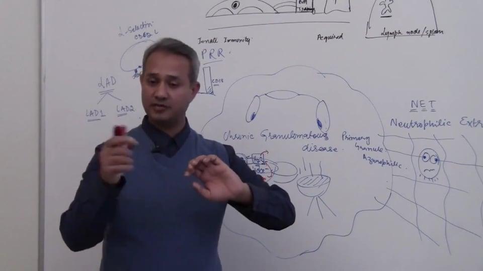Neutrophils (part 19)