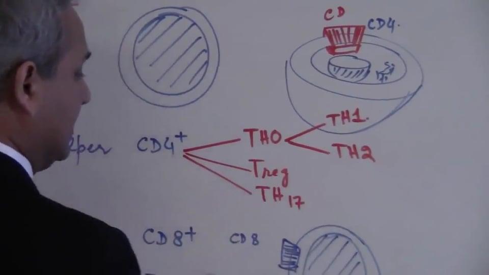 T Cells (part 1)