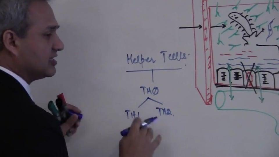 T Cells (part 5)