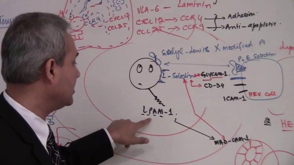 T Cells (part 9)