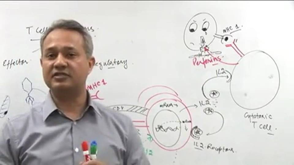 T Cell Functions (part 3)