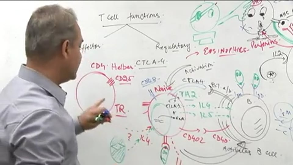 T Cell Functions (part 6)