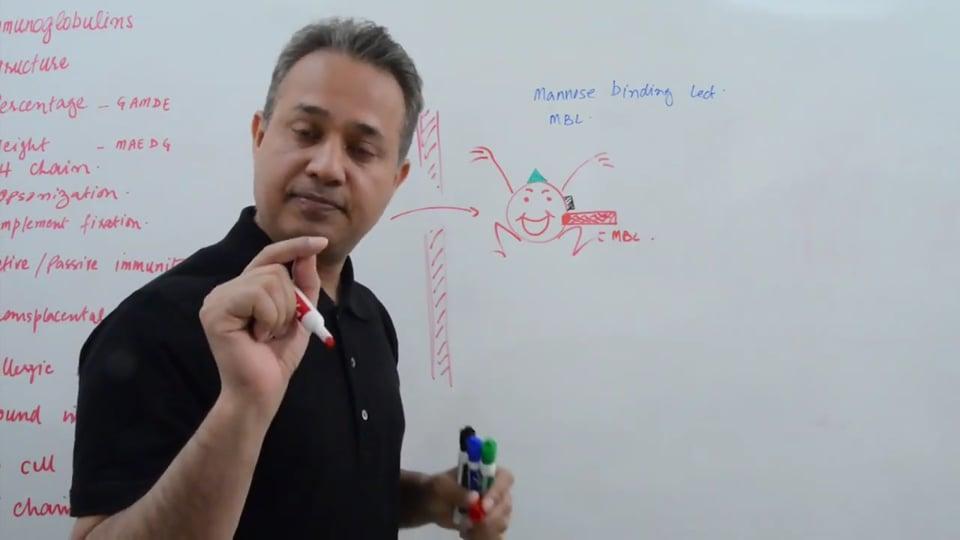 Immunoglobulins (part 2)