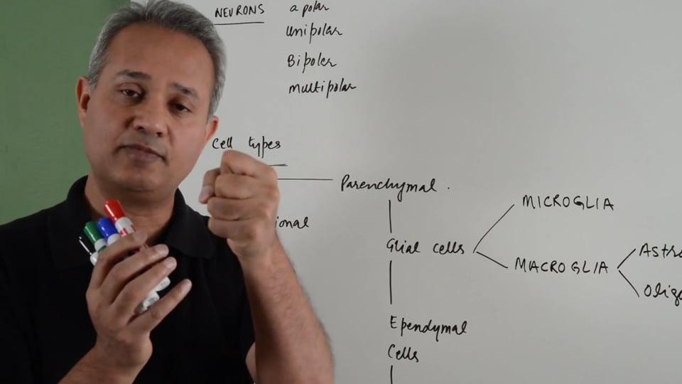 General Histology