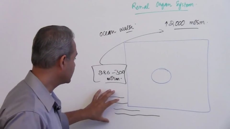 First Session-Renal Physiology: (part 1)