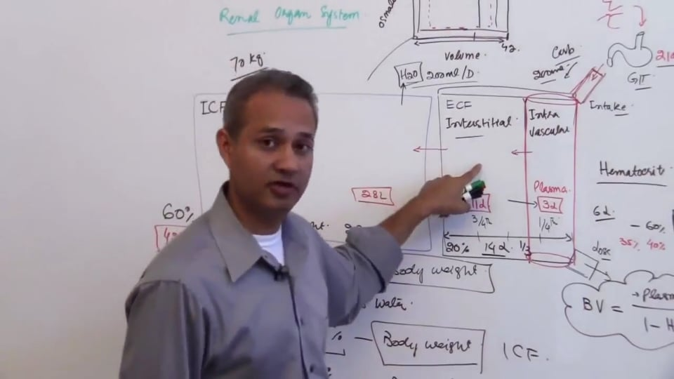 First Session-Renal Physiology: (part 5)