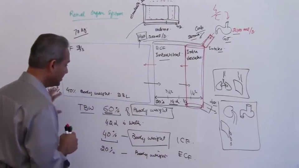 First Session-Renal Physiology: (part 4)