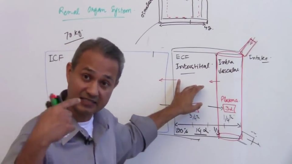 Second Session-Renal Physiology: (part 1)
