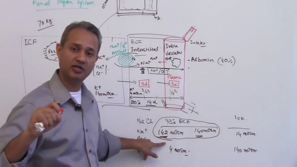 Second Session-Renal Physiology: (part 2)