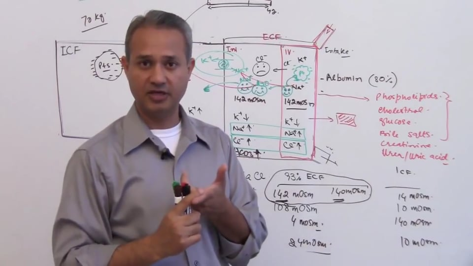Second Session-Renal Physiology: (part 4)