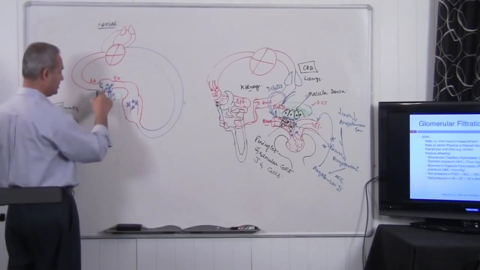 Fundamental of Renal System Lecture 2 Part 4/6