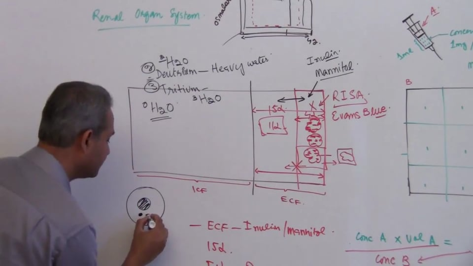Third Session-Renal Physiology: (part 2)