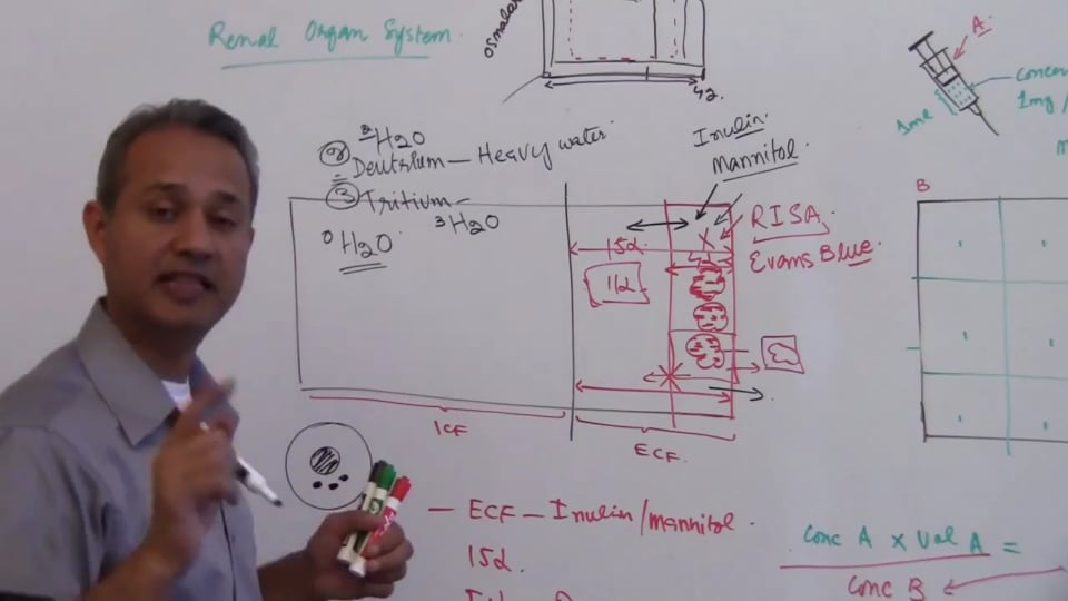 Third Session-Renal Physiology: (part 3)